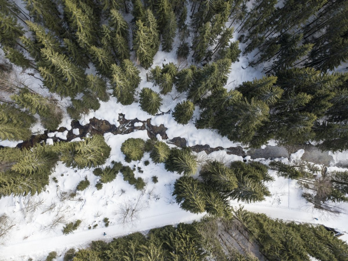 River and forest drone photography