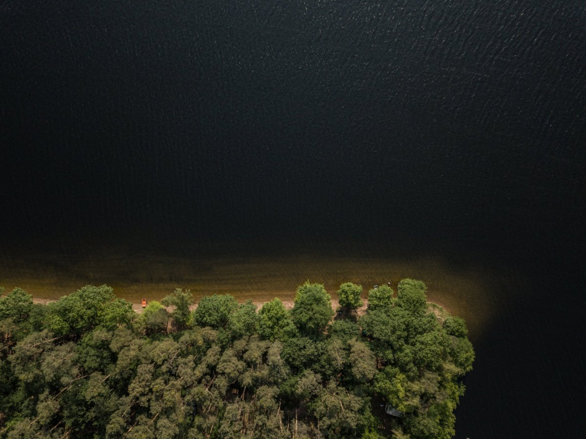 Tree and water drone photography