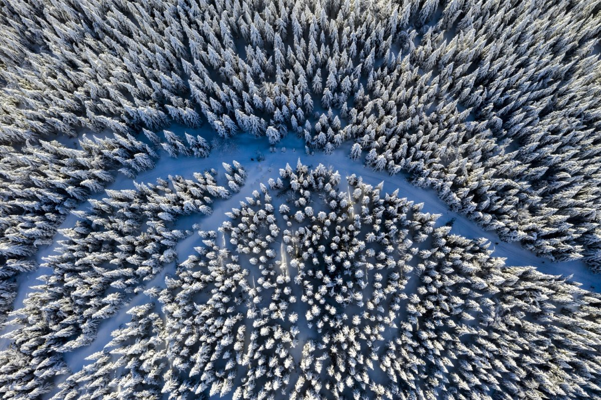 Winter and forest drone photography